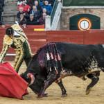 16_Marzo_corrida de toros_2017_Fallas 25