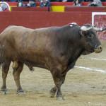 18_Marzo_corrida_de_toros_2017_Fallas 19